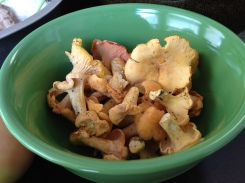 Fresh, local chanterelles! I couldn't pass these up.